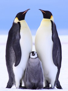 three peguins